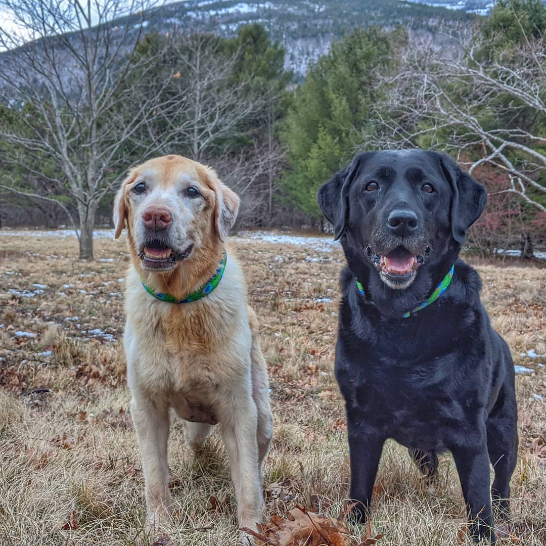 #ashleeandtexas are getting excited for the snowstorm tonight! #expecting6to8inches #mainedogs #dogsofmaine #dogsofacadia #dogsoftwitter  #dogsonadventure #bestwoof #barkhappy #llbeanmoment #dailybarker #ruffpost #houndsbazaar   #nationalparkpaws #my207 @newscentermaine @207tvpic.twitter.com/wKX3vy2udk
