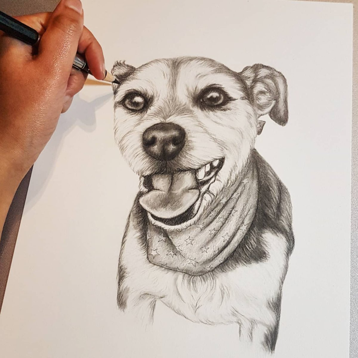 How cute is this little guy?!  Valentine's day is coming up.  Why not order your loved one a custom drawing?   http://WWW.MILLIEMACDOUGALLART.COM  #Art #Artwork #Drawing #Artist #Portraitartist #Portrait #Pencilportrait #petportrait #petportraits #petportraitartist #customart #dog #puppypic.twitter.com/oGfeiePPiC