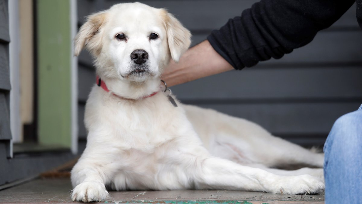 Facial recognition technology is now being used to find lost First Coast Pets. bit.ly/30pXPe7