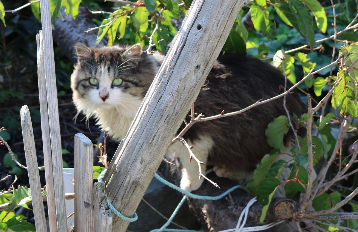 いじめられっ子の猫の名前が決まりました。名前は幸(さち)です。いつも黒キジ猫にいじめられていました。いじめを克服して元気に生きてほしいとの願いから、幸(さち)と名付けられました。詳しいいきさつはブログをご覧になってください。