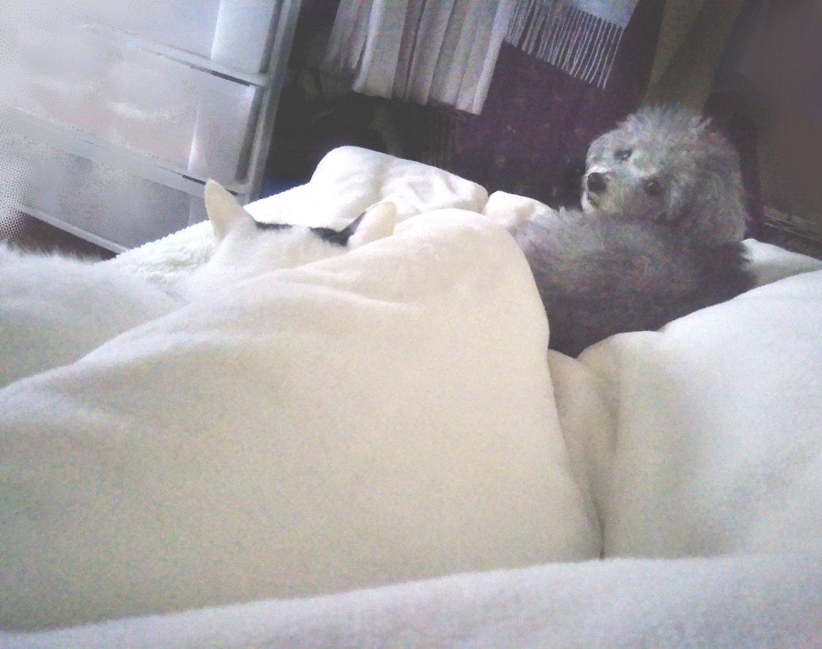 朝、目がさめて(この重さ…2匹だな!)って起きてみたらやっぱり2匹のってた。