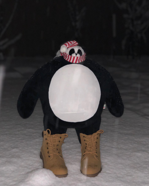 Boz is heading out into freshly fallen snow to try out his new winter boots. He feels bad leaving prints in the snow after Mother Nature did such a nice job. 📸 : @bozbetty