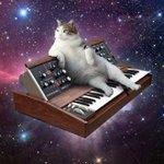 訳のわからない新しい文化!猫と音楽機材と宇宙との癒合が話題!