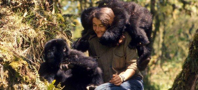 Happy Birthday, Dian Fossey!
