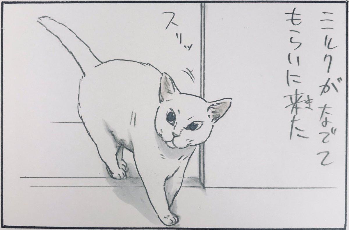 『本日のミルク③』