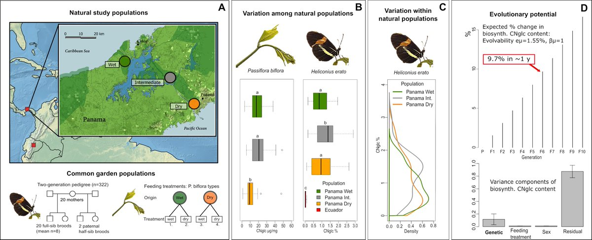 Toxicity of a #Heliconius butterfly population may change up to 10% per y because of high evolutionary potential in this trait, demonstrated by our study highlighting the implications of chemical defense evolution for aposematic and mimetic species.