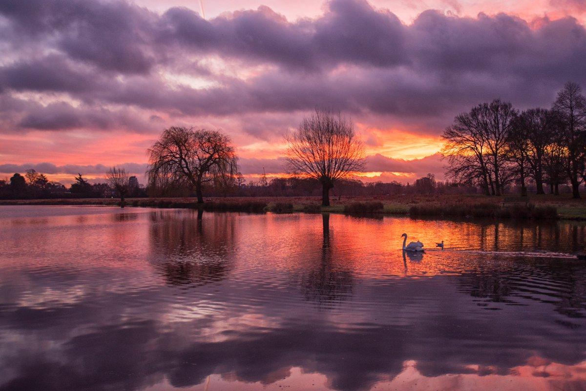 My favourite shot of this morning's wonderful sunrise #BushyPark 15/1 @Teddington_Town @LBRUT @visitlondon @Visit_Richmond1 @BBCEarth @earthcapture @theroyalparks @SurreyLife @TWmagazines @ParksforLondon @Natures_Voice @SurreysWildlife @stormhourpic.twitter.com/WfRSPppXu9