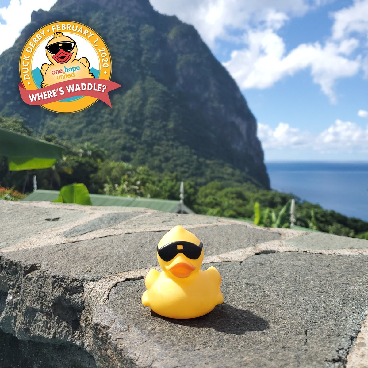 test Twitter Media - Before their big race on February 1st, our #OHUDuckDerby ducks are relaxing in St. Lucia 🌴  Adopt a duck for $5 to enter the race and help raise money for One Hope United and @Osceolaschools.  Learn more at https://t.co/Cd2TyVn5dQ  #AdoptADuck #WheresWaddle #FloridaNonProfit https://t.co/ywu7PvKsOa