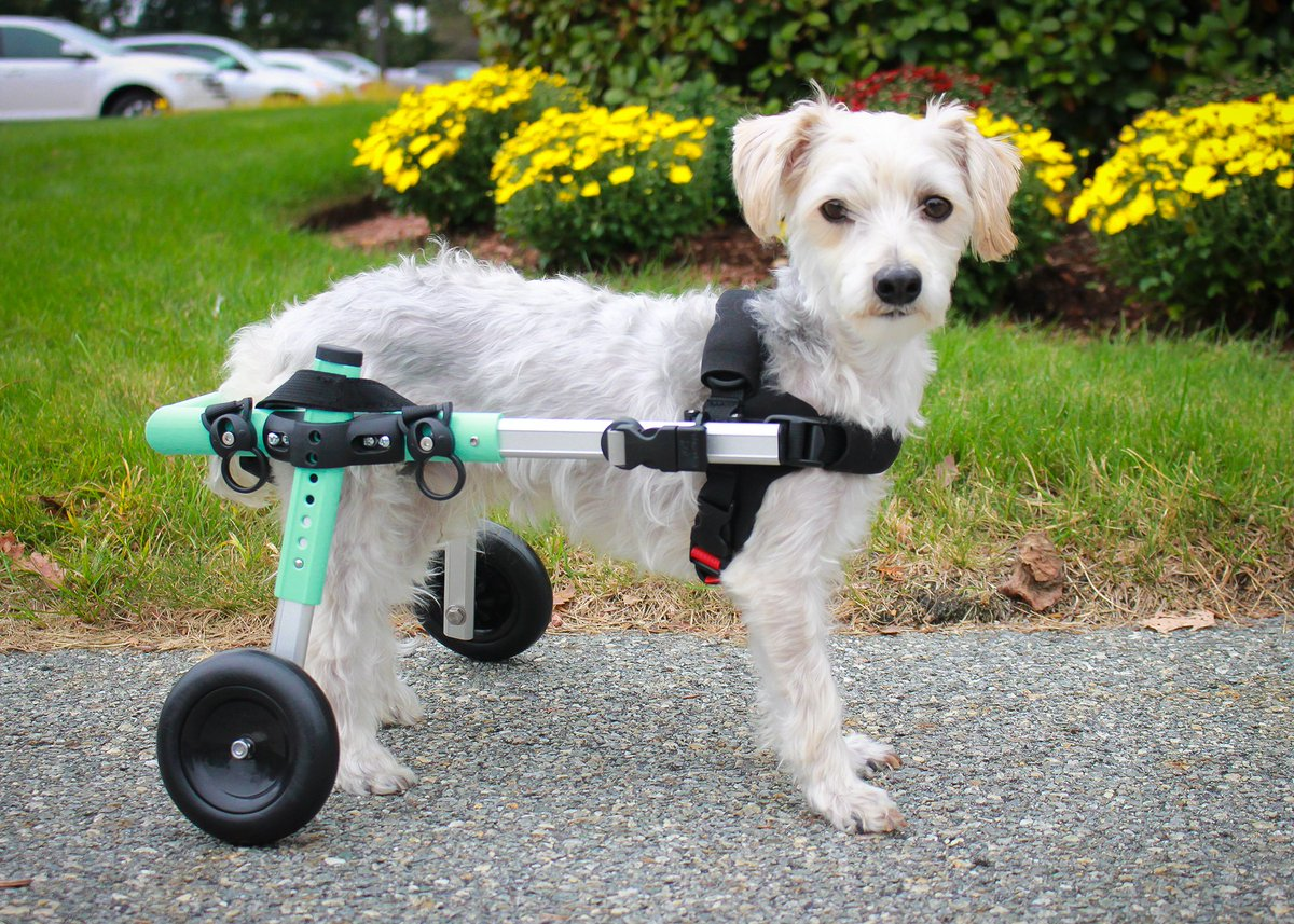 We are excited to announce our NEW Seafoam colored small wheelchair! What do you think?! #walkinpets #handicappedpets #walkinwheels  http://www.walkinpets.com/dog-wheelchair-small-adjustable-wheelchairs-for-dogs-with-disabilities/?fbclid=IwAR0RdI7tNVyh1qtDsnqQ5tltw8d8CQmKWY9BjVP7qROgKQeOIvR5ytMlxUA …pic.twitter.com/fzAEeYStei