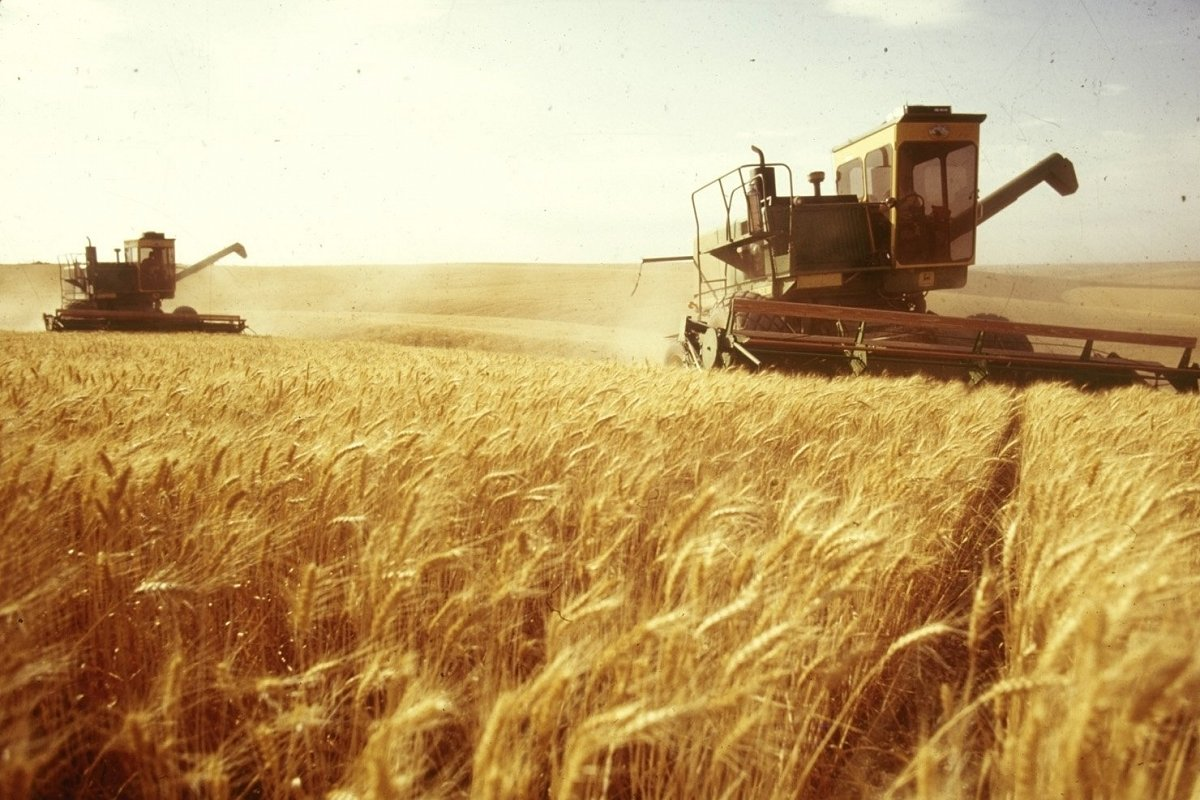 The areas cultivated with wheat and barley in #Syria for the current season have increased significantly (on 180.000 hectares) as a result of the rainfalls and the return of farmers to their homes following the prevalence of security in most of the important agricultural areas.<br>http://pic.twitter.com/P6FjB6hJdJ
