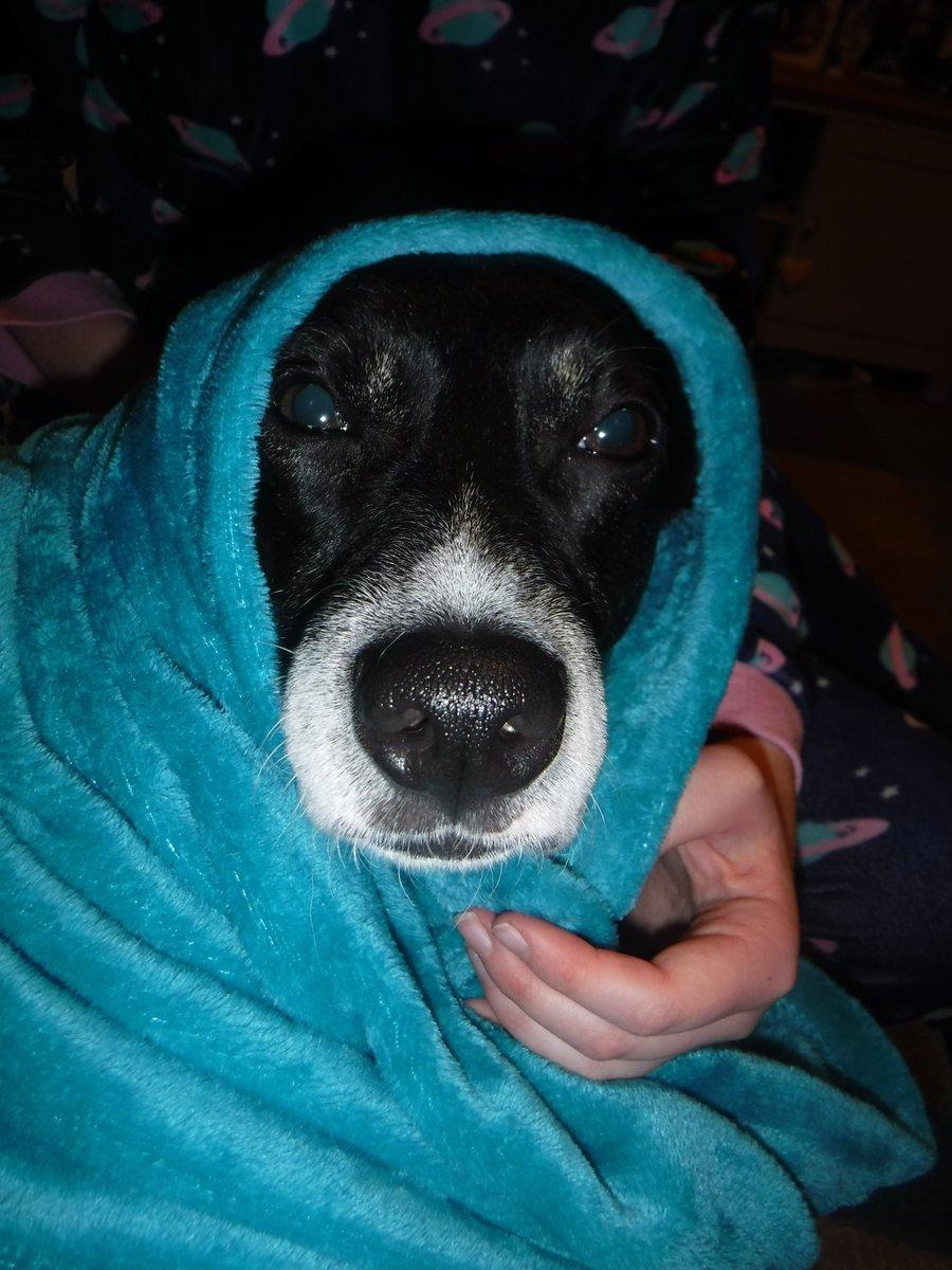 @1001carpetcare Bobby Dog as ET #NationalDressUpYourPetDay