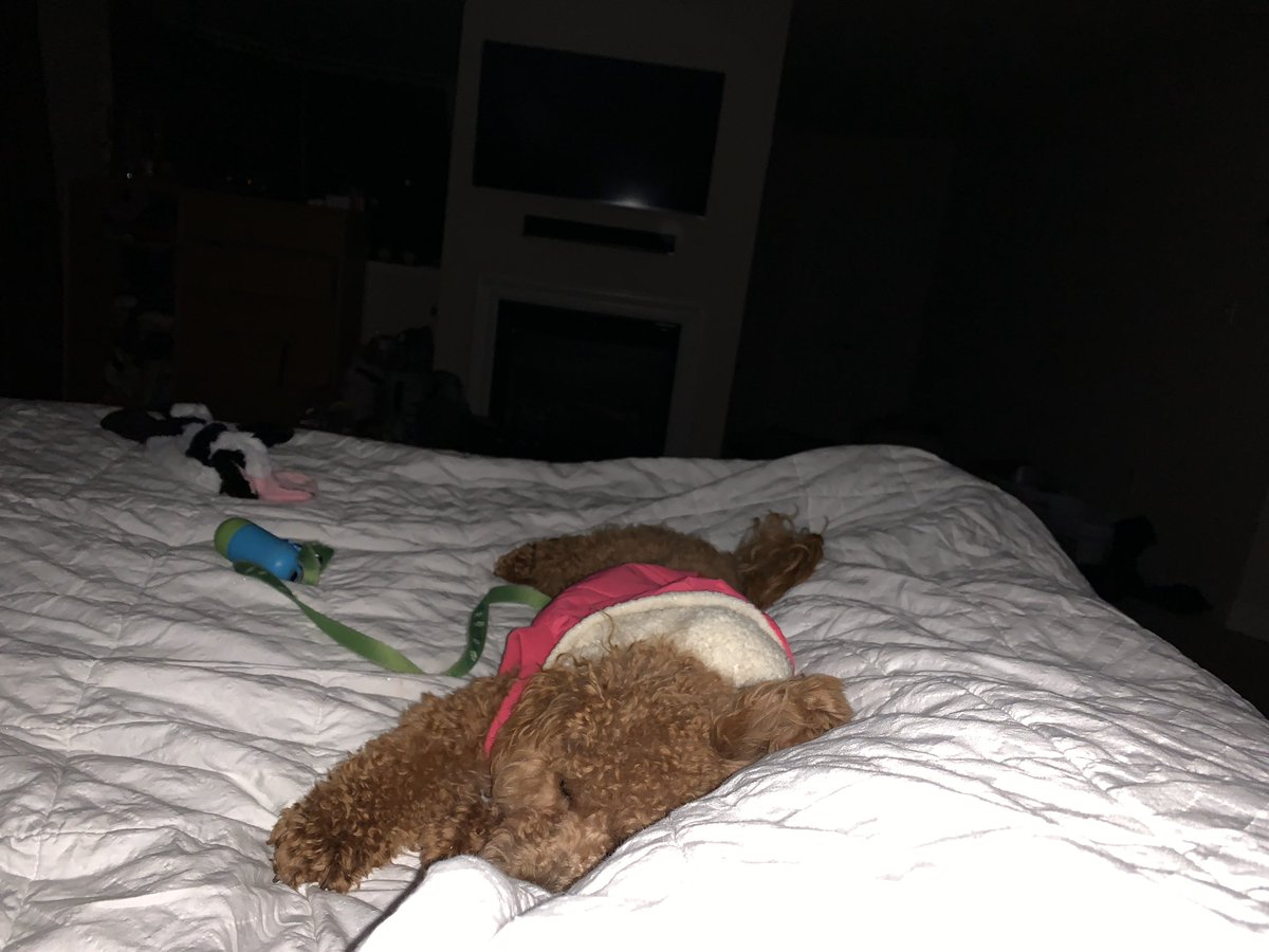 #bargainbinsuperpowers my tiny dog's ability to take over 99.9% of the bed.
