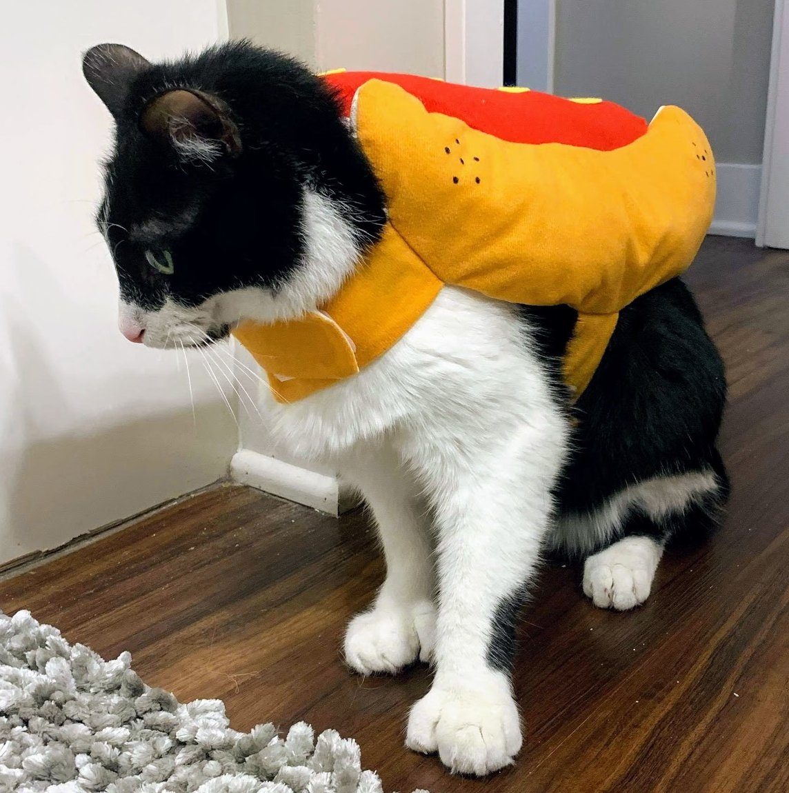 We didn't get the memo that yesterday was #NationalDressUpYourPetDay, so here's a photo of the social media manager's cat dressed up at home as a hot dog for Halloween to make up for it. 😼  (he was not a fan and the costume came off immediately after the photo was taken)