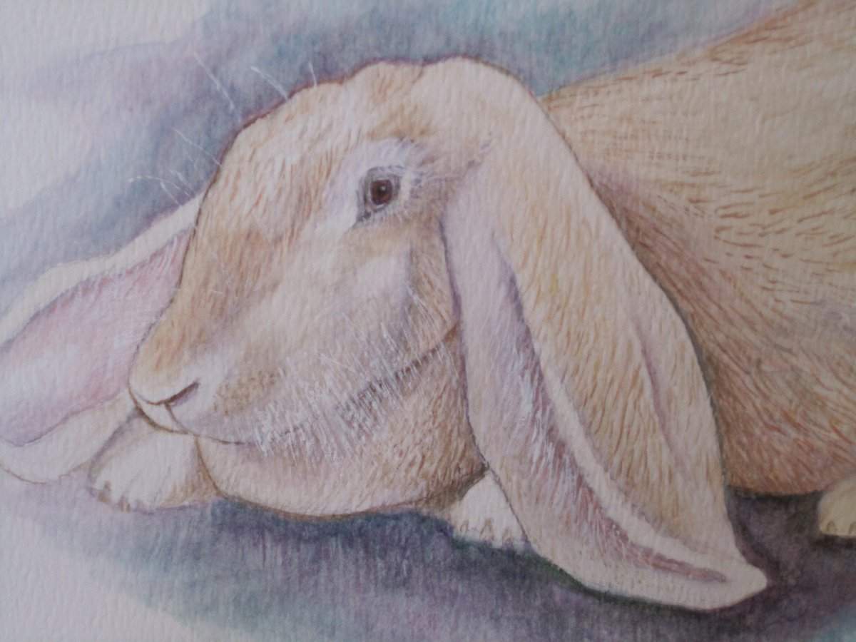 LONG EARED BUNNY (French Lop) - Hand-Painted Original https://etsy.me/2ST43Bc #Christmas 2019 #TMTinsta #BonnieLouLaneART #RabbitWatercolorpic.twitter.com/Zw3Z9BzShL