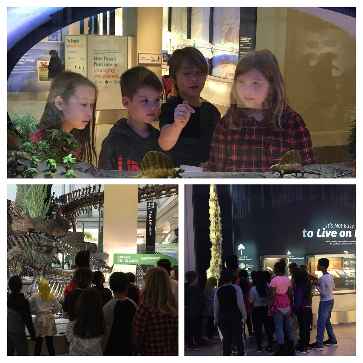 3rd gr Ss ventured out of the classroom to learn about early life forms on earth. <a target='_blank' href='http://twitter.com/APSscience'>@APSscience</a> <a target='_blank' href='http://twitter.com/CampbellAPS'>@CampbellAPS</a> <a target='_blank' href='http://twitter.com/nawazishtareen'>@nawazishtareen</a> <a target='_blank' href='https://t.co/JBZ1skntfb'>https://t.co/JBZ1skntfb</a>