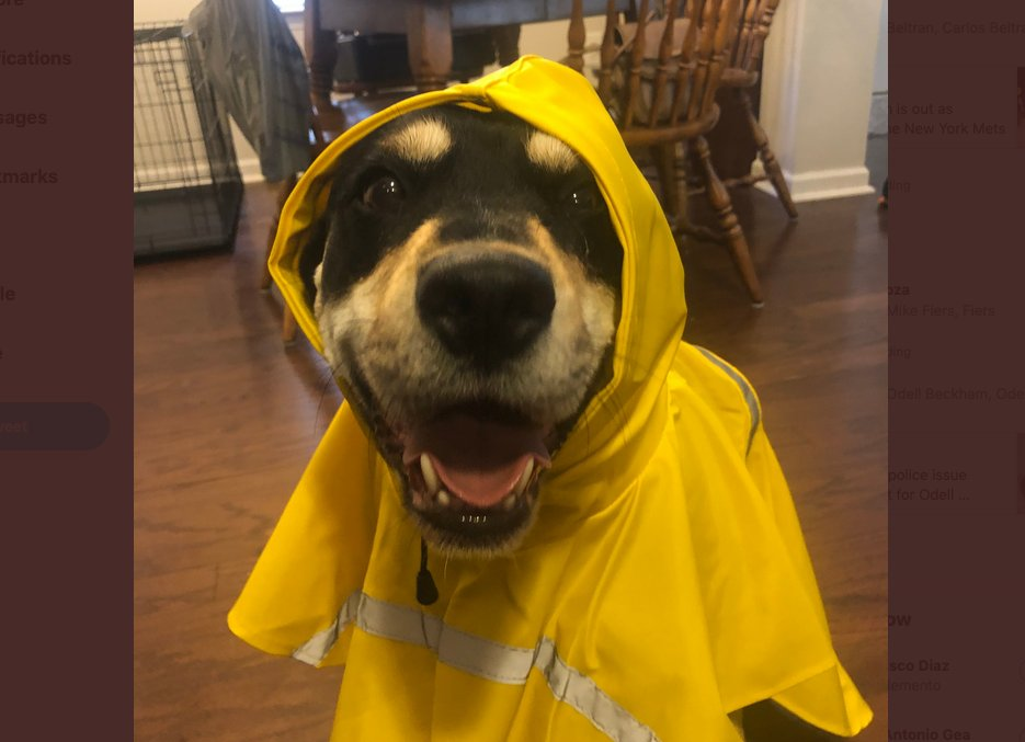 CEI-TheDigitalOffice @copycei Seriously is this not one of the cutest photos you've seen?  #NationalDressUpYourPetDay #DogsOfTwitter @DogsTrust  @dog_rates @dog_feelings @mydogiscutest @dogs  @WeLoveDogsUSA