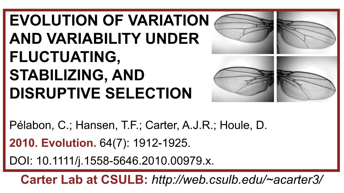 Carter Lab publication: Evolution of variation and variability under fluctuating, stabilizing, and disruptive selection.  #Carterlab #DA #directionalasymmetry #FA #fluctuatingasymmetry #evolution #drosophila #evolvability #artificialselection #canalization