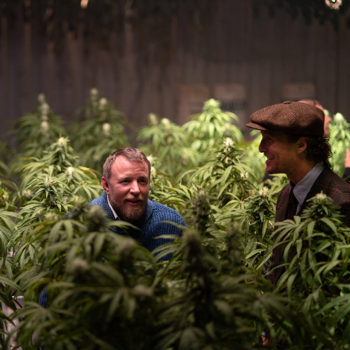 Фильмы марихуане плесень конопля