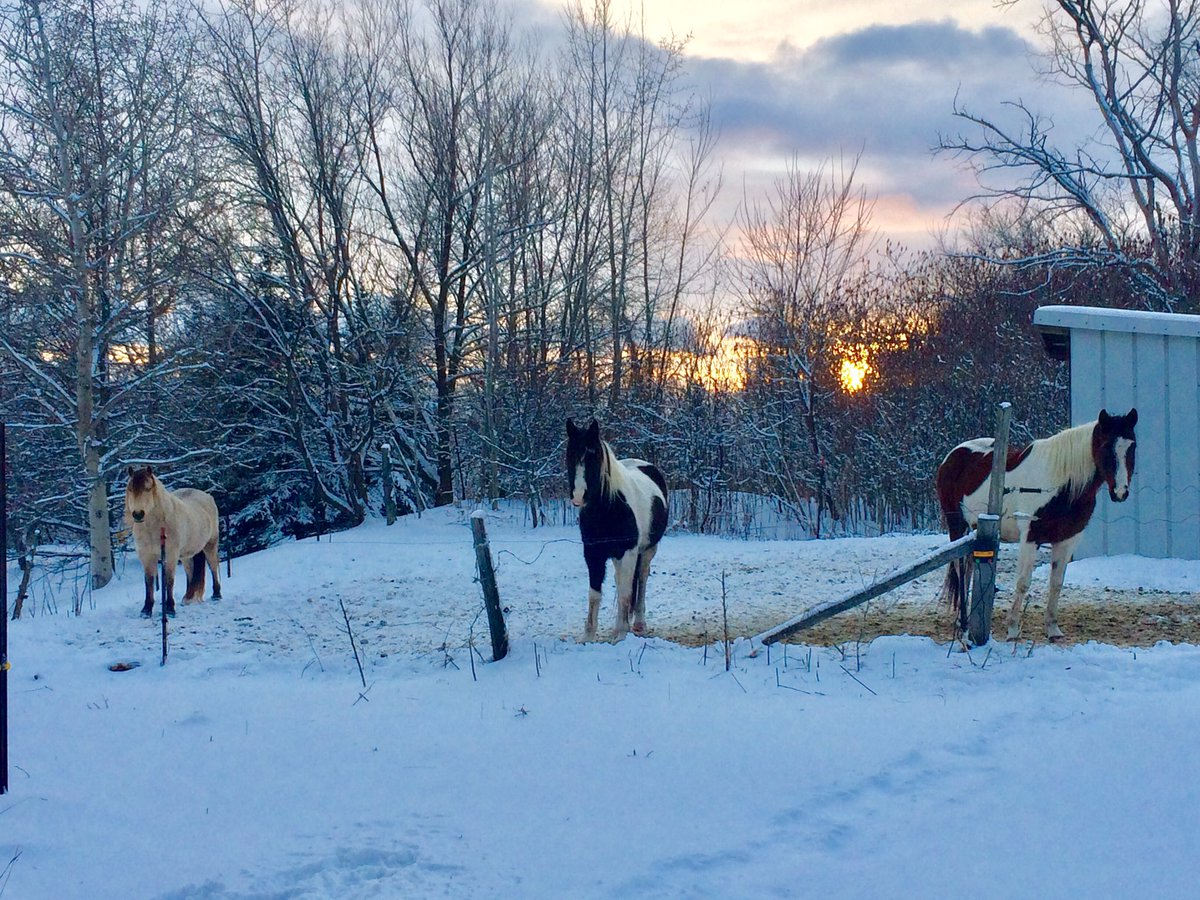 #snowday #sunset at my house just now as I went out to feed my horses before dark. My #gypsy cross Merlin #quarterhorse Sierra and #fjord cross Bailey. #writers #artists I'd love to see your fur loves! Did it snow where you are?pic.twitter.com/xCA3CQ31eb