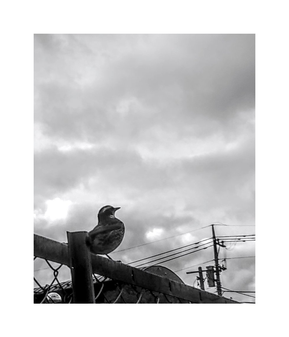 #blackwhite #bw #simple #空 #natural #planet #shadow #eyes  #sky #bnw #street #blackandwhite #bird #monochrome #landscape #streetphotography #earth #play #freedom #fashion  #artistic #darkness #noir #inspiration #nature #life #style #everyday #lifestyle #live #写真 #白黒 Rin。pic.twitter.com/JwTzzNf6Sx