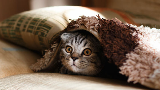 【ネコと和解せよ】「無神論者はネコ好き」「神に求めるものをネコで代用している」米大学が研究発表「自分自身を最上位と位置づけがち」なネコを必死で追いかけ、愛情を注ごうとする傾向があるとも指摘した。
