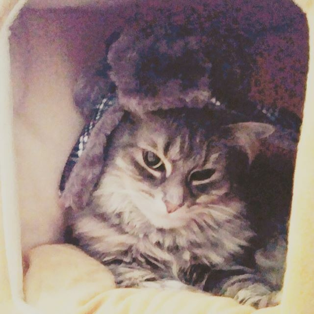 I'm ready for whatever winter throws at us, wearing my favorite winter hat! ~ Colette. Submitted by: Barbara LeHoullier #catlife #winterhat #whatcatsdo #catoftheday #catsinhats #pawfection #catlover #catlady #catblogger #instacat #catstagram #catsofinsta… https://ift.tt/2RBHRtp pic.twitter.com/T12HAcDuRI