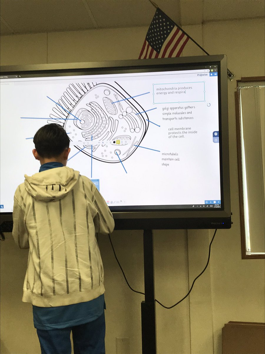 Student labeling a cell diagram ♥️Prowise Presenter 10 #williams_usd #prowise