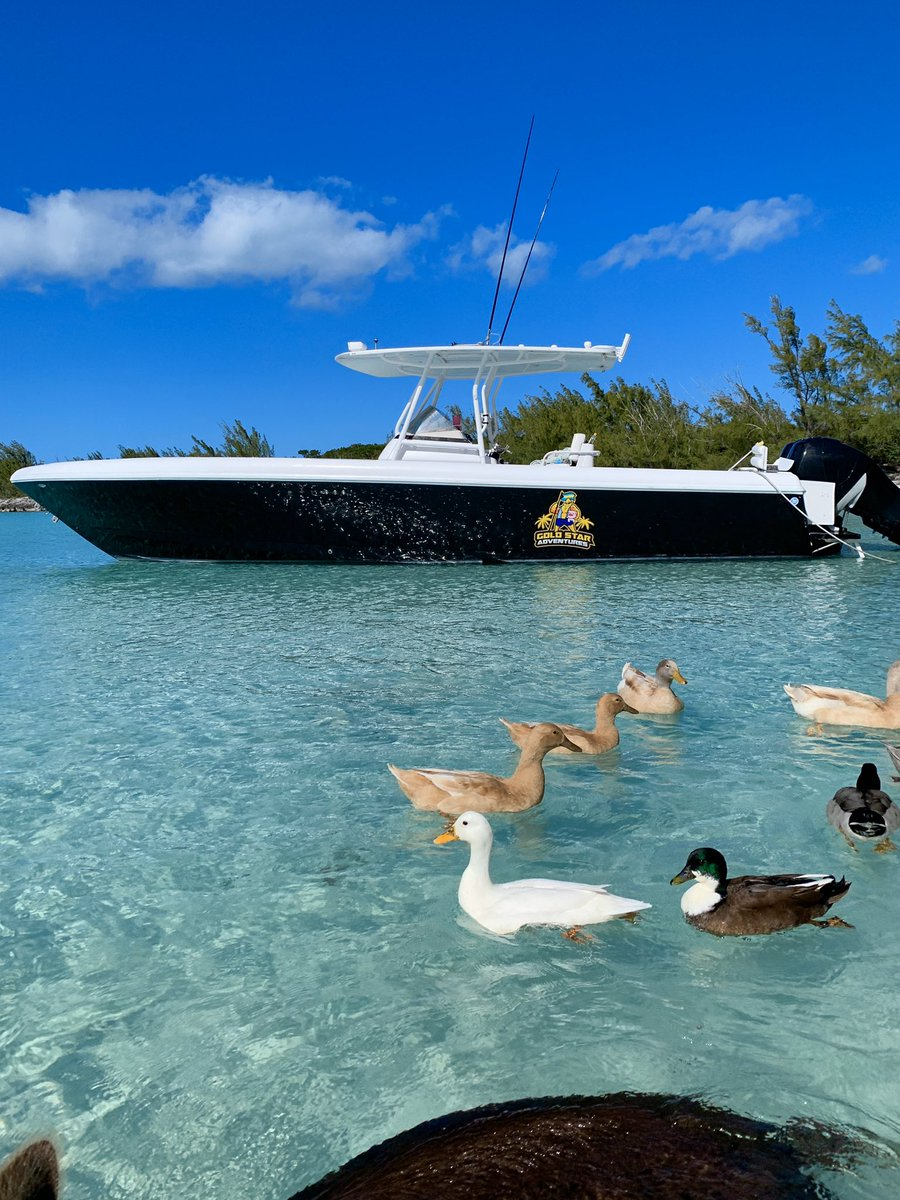 Eleuthera Bahamas boat tours visit the Swimming pigs hand feed and swim with sea turtles visit beautiful beaches and sandbanks go snorkeling and so much more! Call or email us and book your adventure now! ______ Contact Us At:   GoldStarAdventures@gmail.com 1(242) 823-4996 <br>http://pic.twitter.com/Bvy9ZCS02g