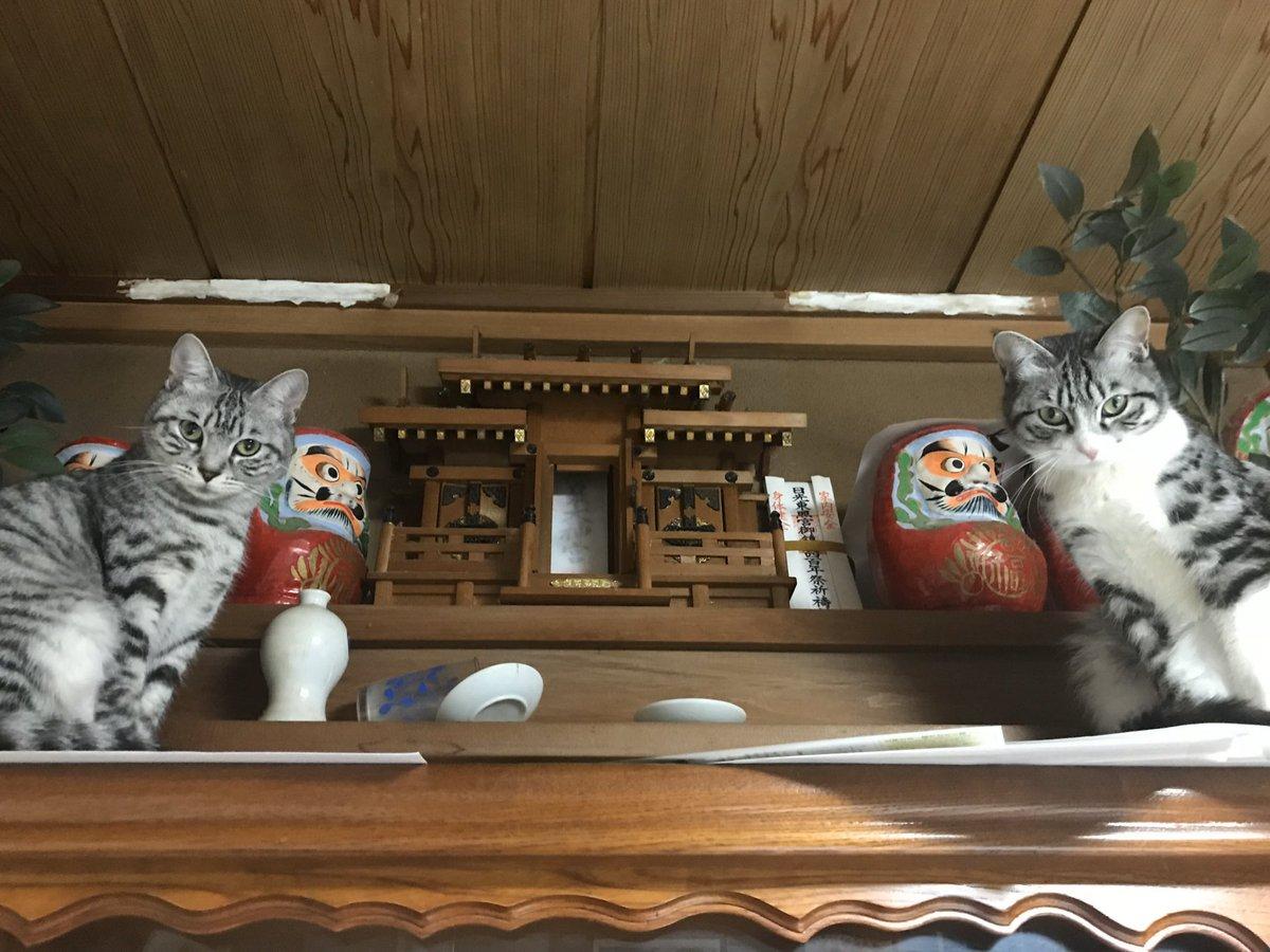 「ネコ好きは無神論者」⇒我が家はネコ様が神。