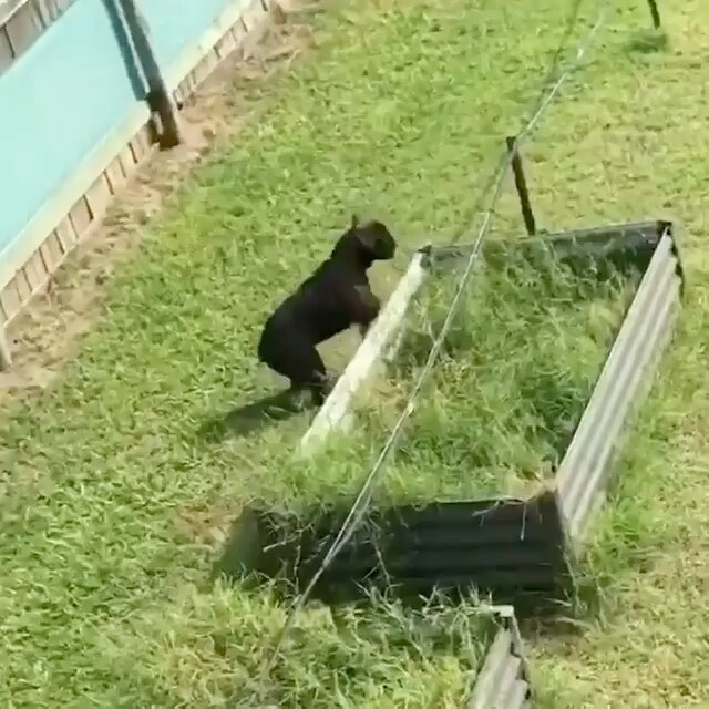 Too funny #dogsmakemehappy  @snowy_winston . . . . . #puppydogvideos #frenchievids #funnydogs #puppydogvideos #stella_and_friends #buzzfeedanimals #whatsthat #hilariousvideos #topdogsofinstagram #frenchiesociety https://ift.tt/2R1h4Yhpic.twitter.com/0xaaH5TsvQ