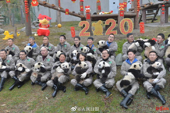 Twenty pandas cubs in Sichuan, China, conveyed its Happy New Year greetings on Friday, the 23rd day of the 12th month in the Chinese lunar calendar. Traditionally, this day is called Xiaonian or the Preliminary Eve, a day when Chinese people offer sacrifices to the Kitchen God.