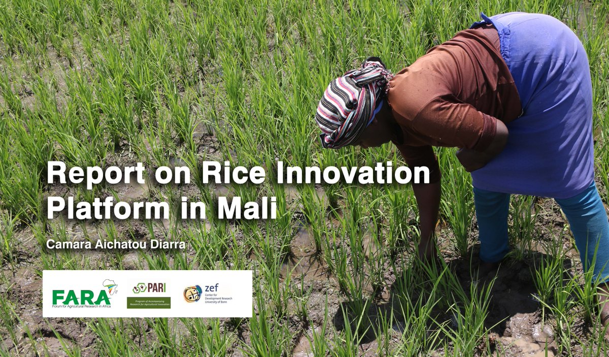Rice alone accounts for about 5% of the country's GDP, about 220 billion CFA. It ranks well behind livestock and its share in national added value increases with the increase in trade flows to urban areas. It is considered as a strategic product in Mali. https://t.co/0vkJAVSj1c https://t.co/1iyKJr4MyZ