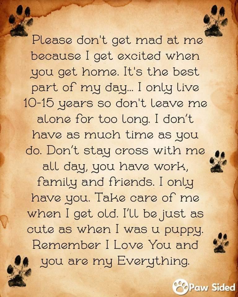 #dogsarefamily #dogsarelove #dogs #Malinois #GermanShepherd #AdoptDontShop https://www.amazon.co.uk/dp/1916260101pic.twitter.com/OnsdO5wbog