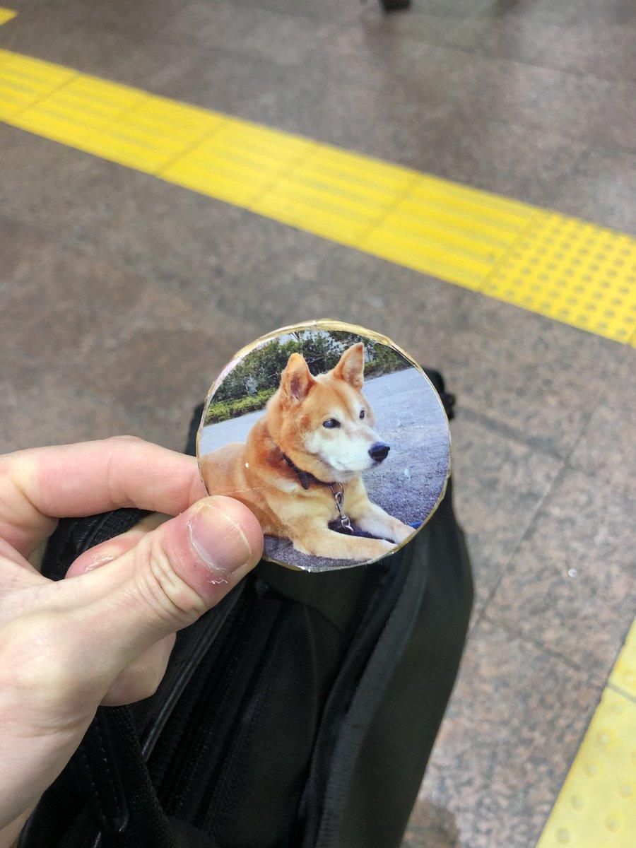 【拡散希望】西荻窪駅にて犬のバッチを拾いました。駅窓口に届けてあります。手作りっぽかったです。おれも実家に老犬がいるので、大切なものだと思います。どうか持ち主の方へ届きますように。#西荻窪 #総武線 #中央線 #柴犬 #取得物 #落とし物