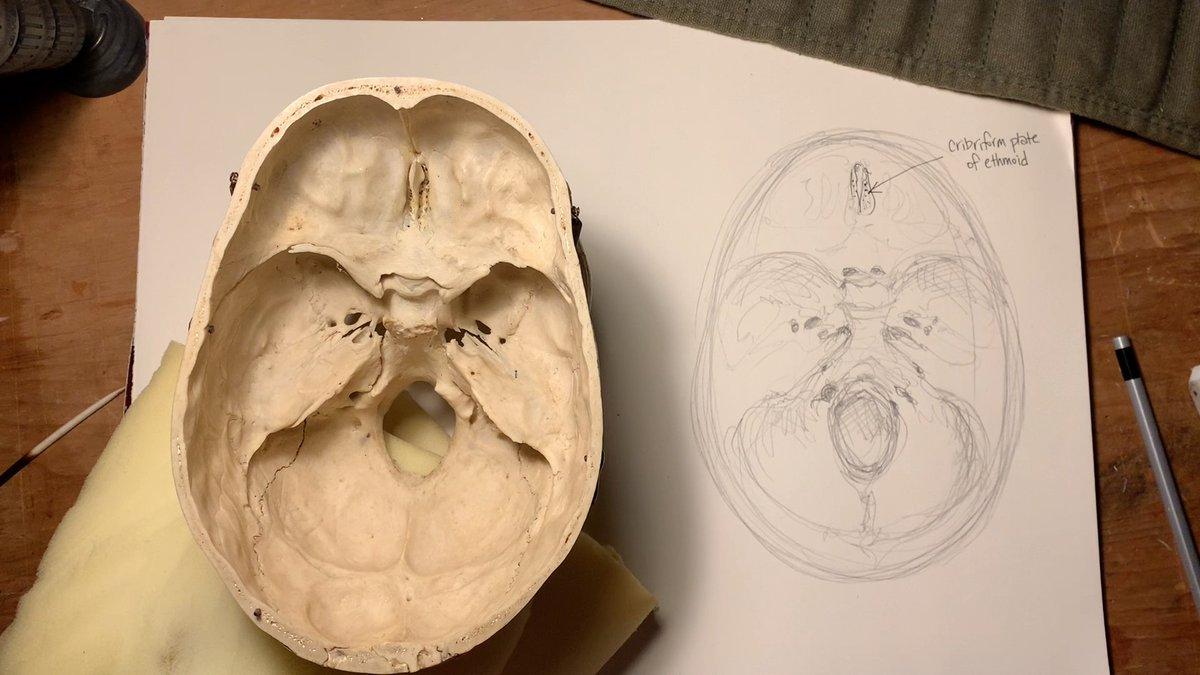 See the full video - all twelve cranial nerves - here: https://vimeo.com/385448347