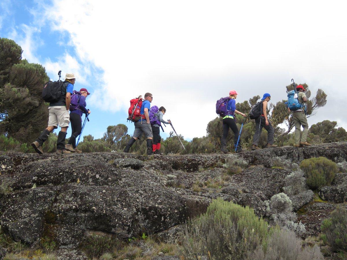 Mt. Kilimanjaro trekking is the most amazing experience of lifetime. Mark on your calendar  #hike #trekbikes #trek #mt_kilimanjaro #adventure2africa #adveture #safari #tanzaniasafari #africa #nature #naturephotography #wildlife #photography #serengeti #exprole #travel