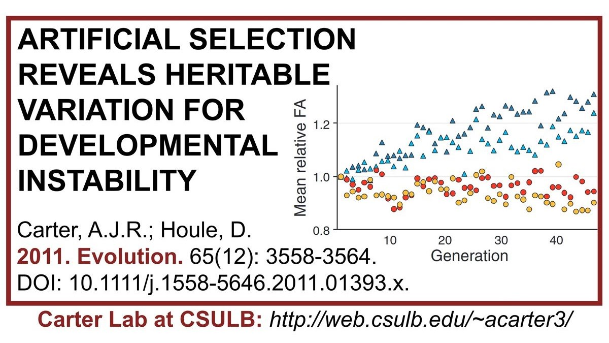 Carter Lab publication: Artificial selection reveals heritable variation for developmental instability. Spoiler: selection changed fluctuating asymmetry.  #Carterlab #FA #fluctuatingasymmetry #evolution #drosophila #evolvability #artificialselection #wings