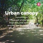 Image for the Tweet beginning: Urban trees impact the economic