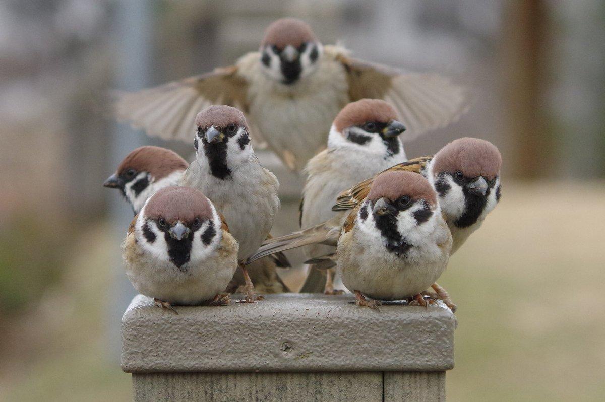 なんか映画のポスターになりそうな構図#雀 #スズメ #すずめ #sparrow #鳥 #小鳥 #野鳥 #bird