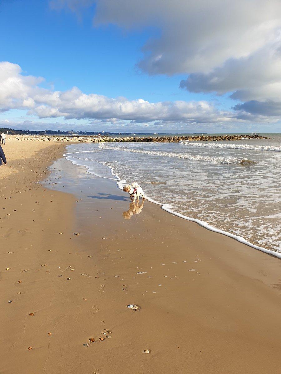 Sunny so it has to be Sandbanks walk. <br>http://pic.twitter.com/aEOHqljWhh