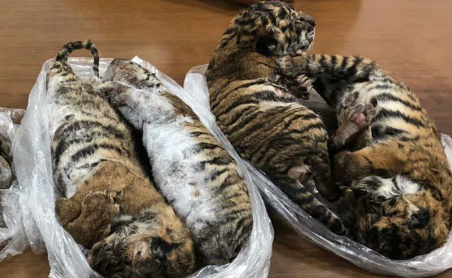 Vietnam: Hanoi court sentenced 3 men to 5 to 6 years in jail for trafficking #tiger carcasses from Laos bit.do/fpuuV #WildlifeCrime #WildlifeTrafficking