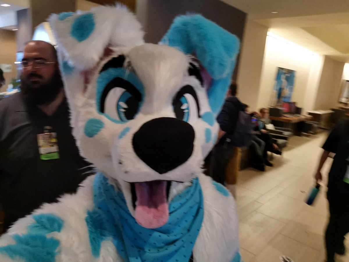 I'm being a dog now at #FurCon2020 #FC2020!   @DontHugCacti #dailyDHC <br>http://pic.twitter.com/8SUnieYcoS