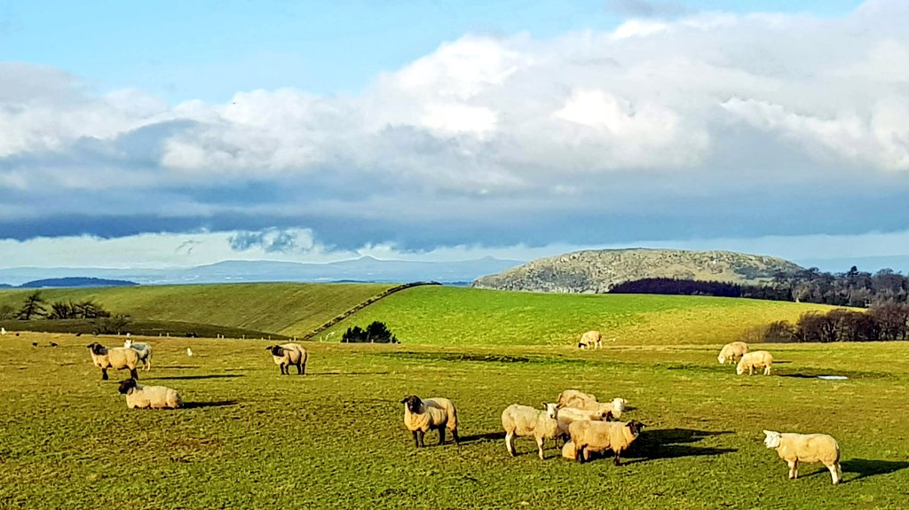 The volcanic landmark of Traprain Law #visitscotland #FridayThoughts #sheep #countryfile #volcano #FridayVibes #hiking #getoutdoors<br>http://pic.twitter.com/iukEusEthf