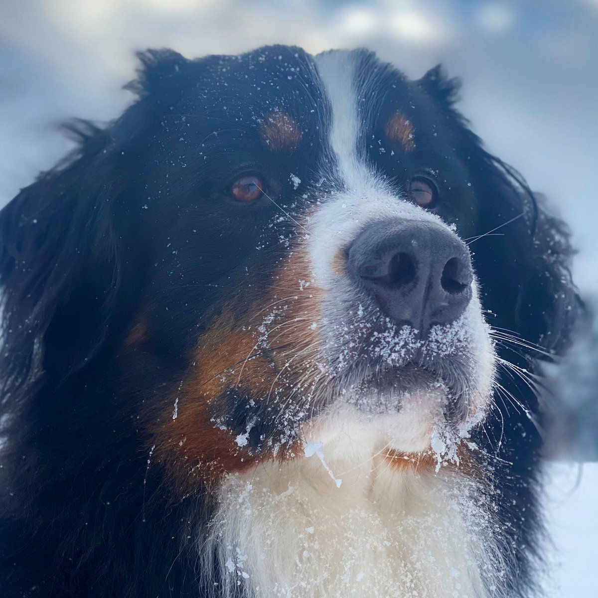 Is -25C warmer than -35C and -45C The answer? Yes.  Yes it is. . #warmingup #FridayThoughts #extremecold #dogs #itsrelative<br>http://pic.twitter.com/8JRBGhjQlz