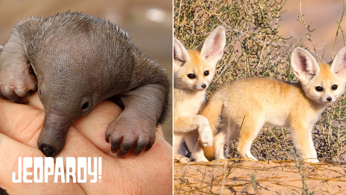Todays CHECK OUT THE CRITTER category contains a collection of cuddly cuties!