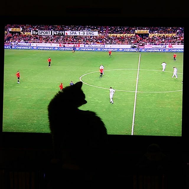 This little feline lurking in front of the TV.  Hasn't got a care in the world on who is winning this footie match  . . Day 15 #fmspad #fms_myshadow #instaphoto #fmsphotoaday #rdguk https://ift.tt/2NCnCKE pic.twitter.com/HE3vZ82Hi5