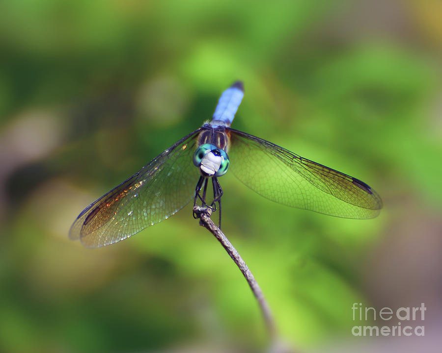 The Face of a #Dragonfly ~  ~ #Insect #Macro #NewRiverNature #Photography #InsectPhotography #Odonata