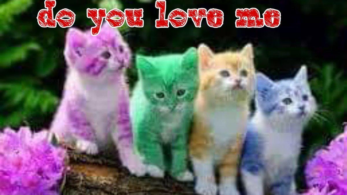 Cute cats..lovely cats..who ...   #Cats #Cat #Kittens #Kitten #Kitty #Pets #Pet #Meow #Moe #CuteCats #CuteCat #CuteKittens #CuteKitten #MeowMoe   #CameraPhone #CuteCatsVideos #CuteKittensVideos #CuteKittiesVideos #CuteMeowVideos   https://www.meowmoe.com/560344/cute-cats-lovely-cats-who-love-it-%e2%9d%a4/…   .pic.twitter.com/06EqkVzYY5