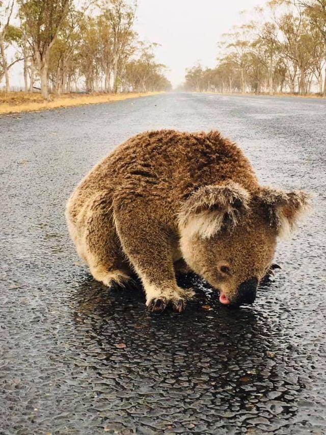 やった!何ヶ月も続く火災の中、オーストラリアでやっと雨が降ってる!