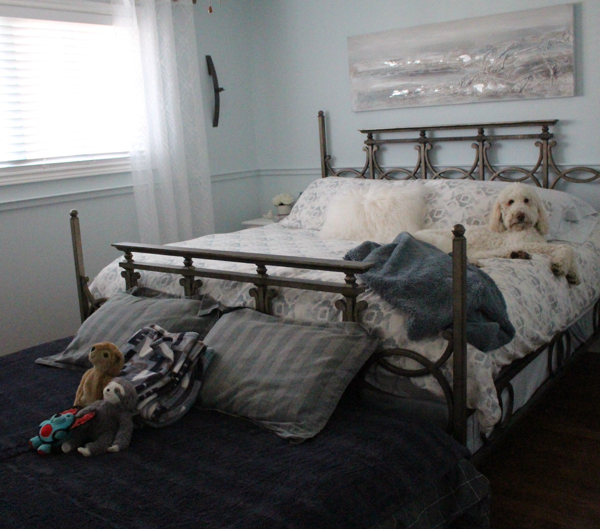 """When you get your dog their own double bed.... I'm pretty sure she's thinking """"F*ck you + your double bed, I look  better in yours. #FridayThoughts <br>http://pic.twitter.com/5MQCElHsWX"""